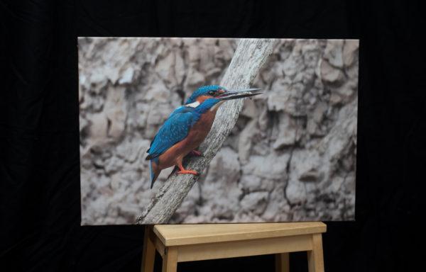 Foto na plátně, 40 x 60 cm, ledňáček říční